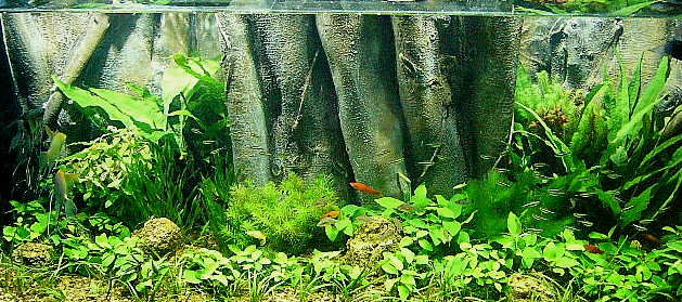 fish tank wallpaper. Aquarium Backgrounds
